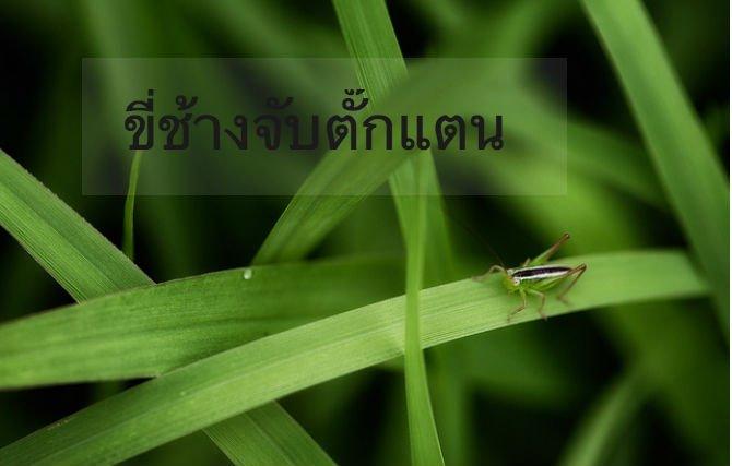 11-interestin-idioms-b10-Thai.jpg