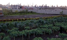 Article: Seeds in the city, the pros and cons of urban farming
