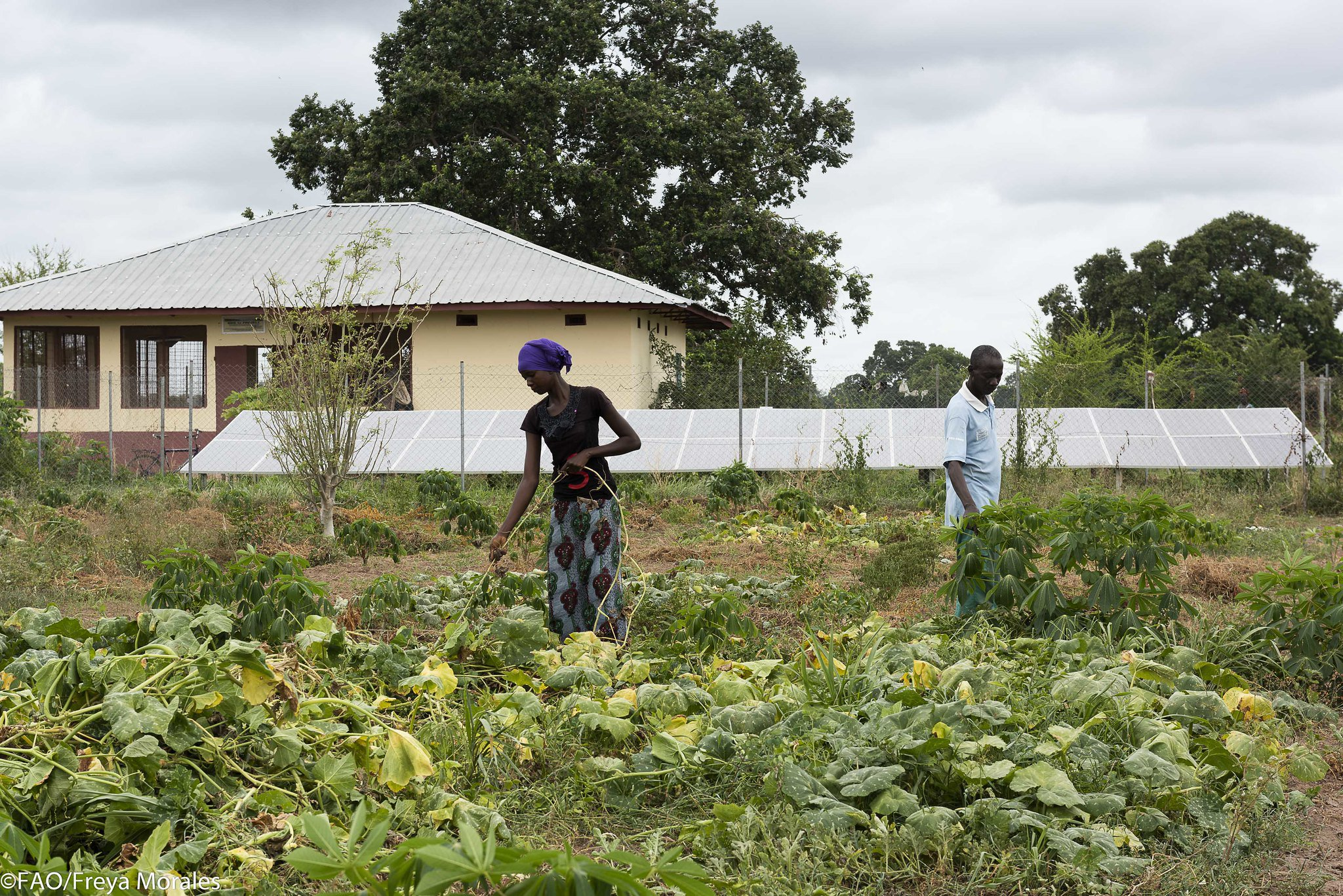 Gambia Landwirtschaft Frauen.jpg