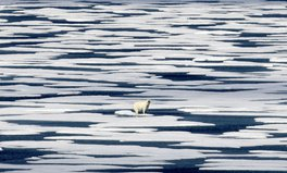 Article: Polar Bears Need Disappearing Sea Ice in More Ways Than One