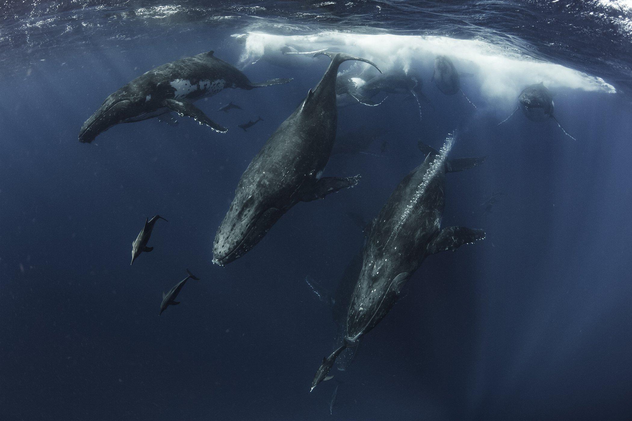 UnderwaterPhotographerOfTheYear_402ScottPortelli_006.jpg