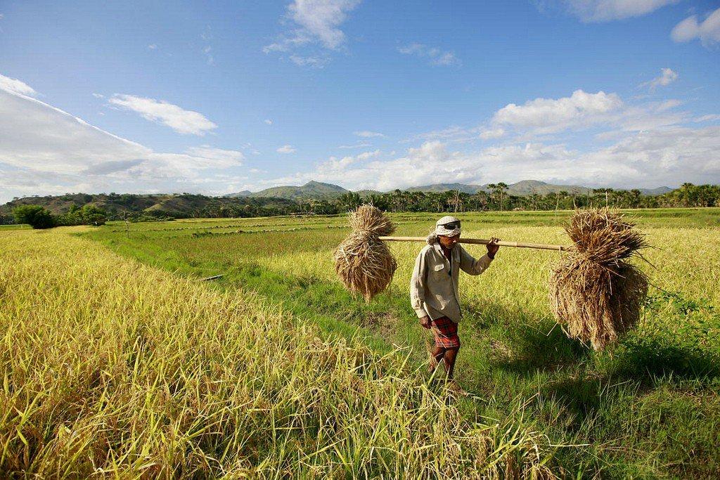 Timor Leste.jpg