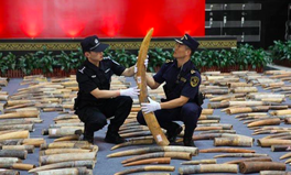 Artikel: China Just Seized 2,748 Elephant Tusks in Huge Underground Ivory Bust