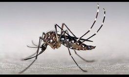 Article: 6 Fragen – 6 Antworten zum Zika-Virus