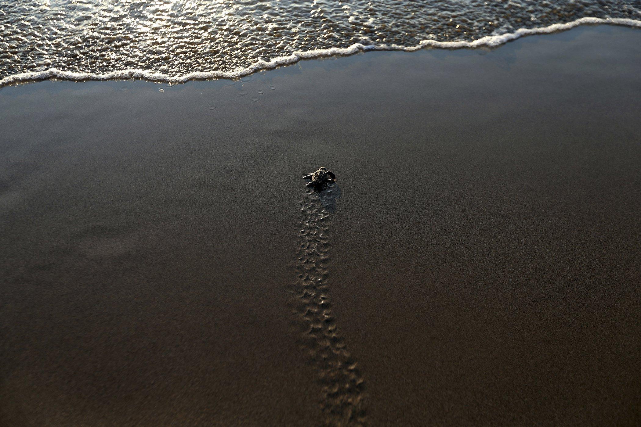 Environmental-Photos-August-Cyprus-Turtle-Conservation.jpg