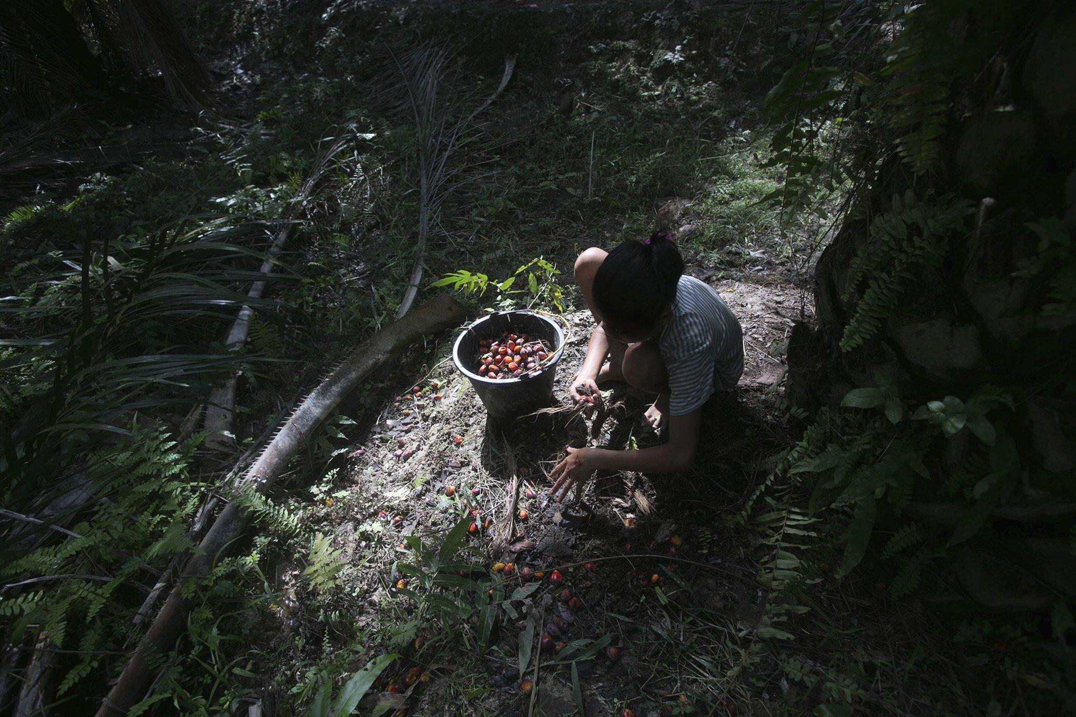 Palm-Oil-Explainer-Child-Labor.jpg