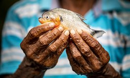 Article: The World's Freshwater Fish Are Being Pushed to the Brink of Extinction