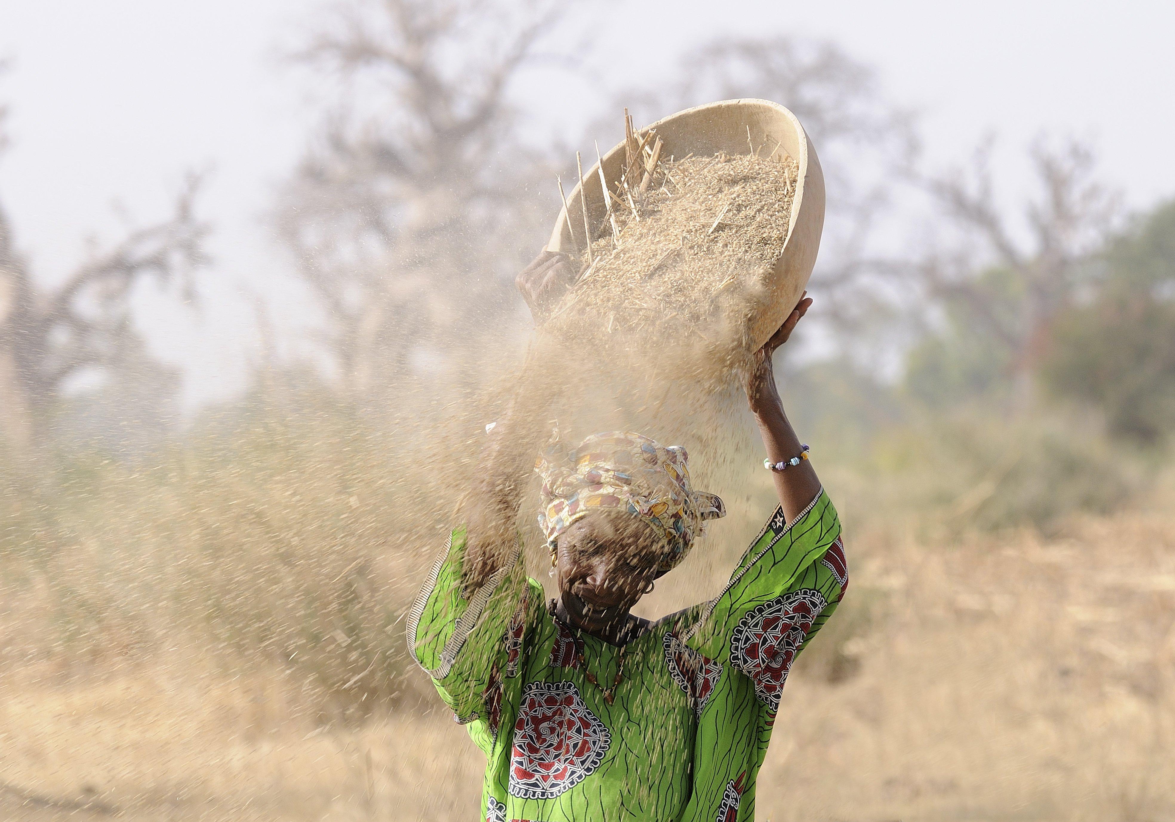Grain in Wind.jpg