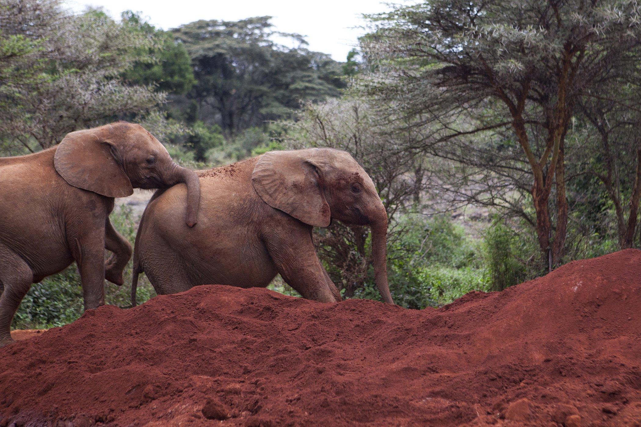 Elephant-Africa-Dani-Selby.jpg
