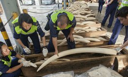 Article: Hong Kong makes a move to end ivory trade