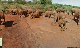 Article: Hang with the elephants of Kenya on Google Street View