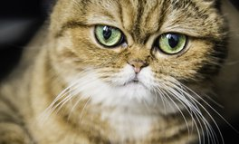 Article: It's 'Fat Cat Thursday' — The Day Top CEOs Will Already Have Out-Earned The Rest of Us