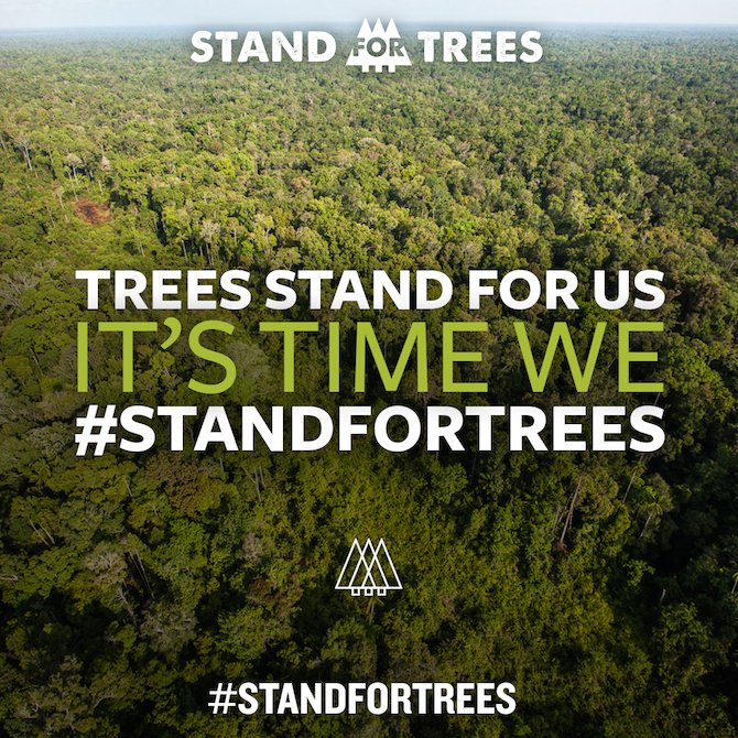 stand for trees.jpg