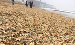 Article: Tens of Thousands of Dead Sea Creatures Just Washed Up on UK Beaches