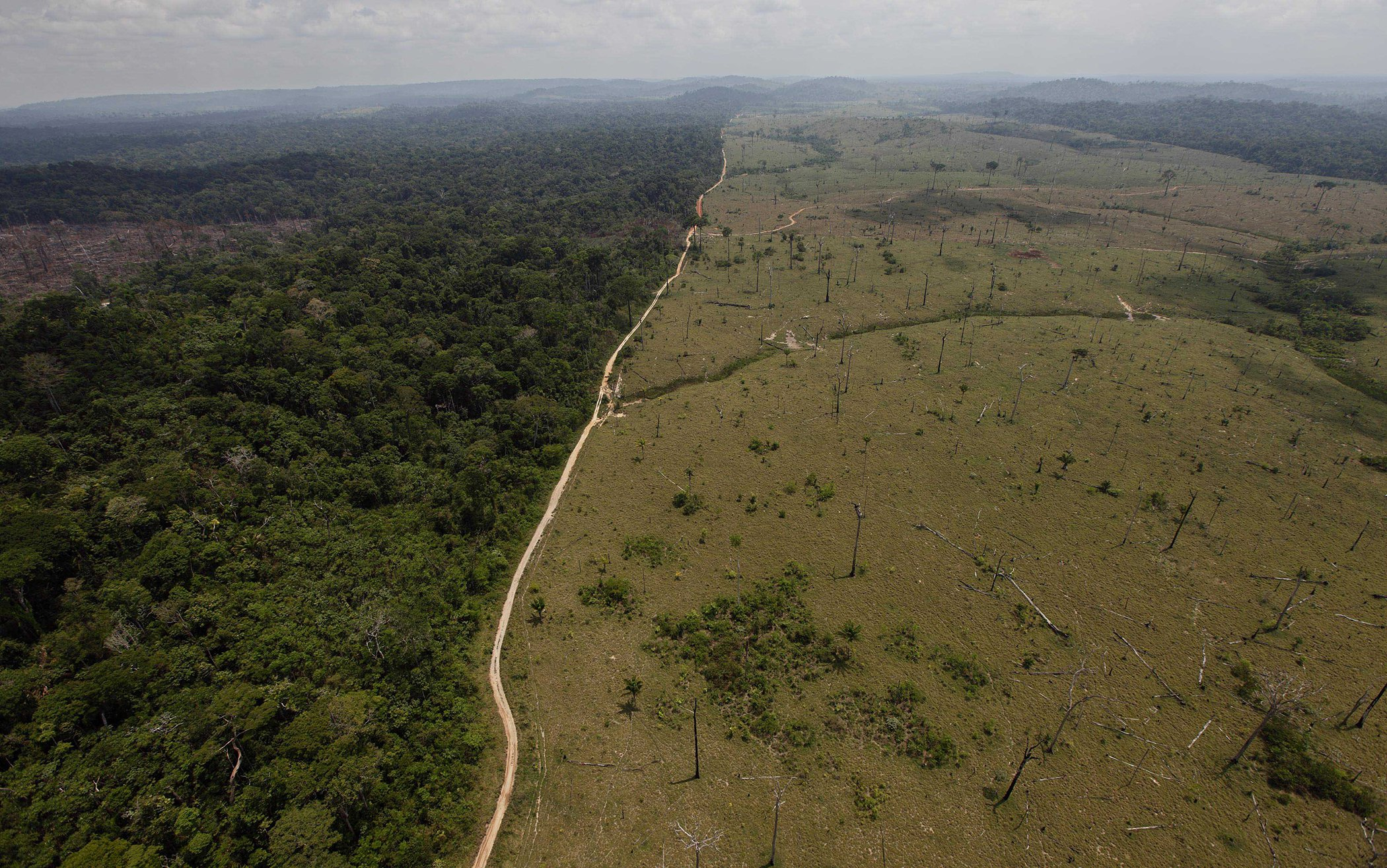 Amazon-Deforestation-Biodiversity-Affect-Poverty.jpg
