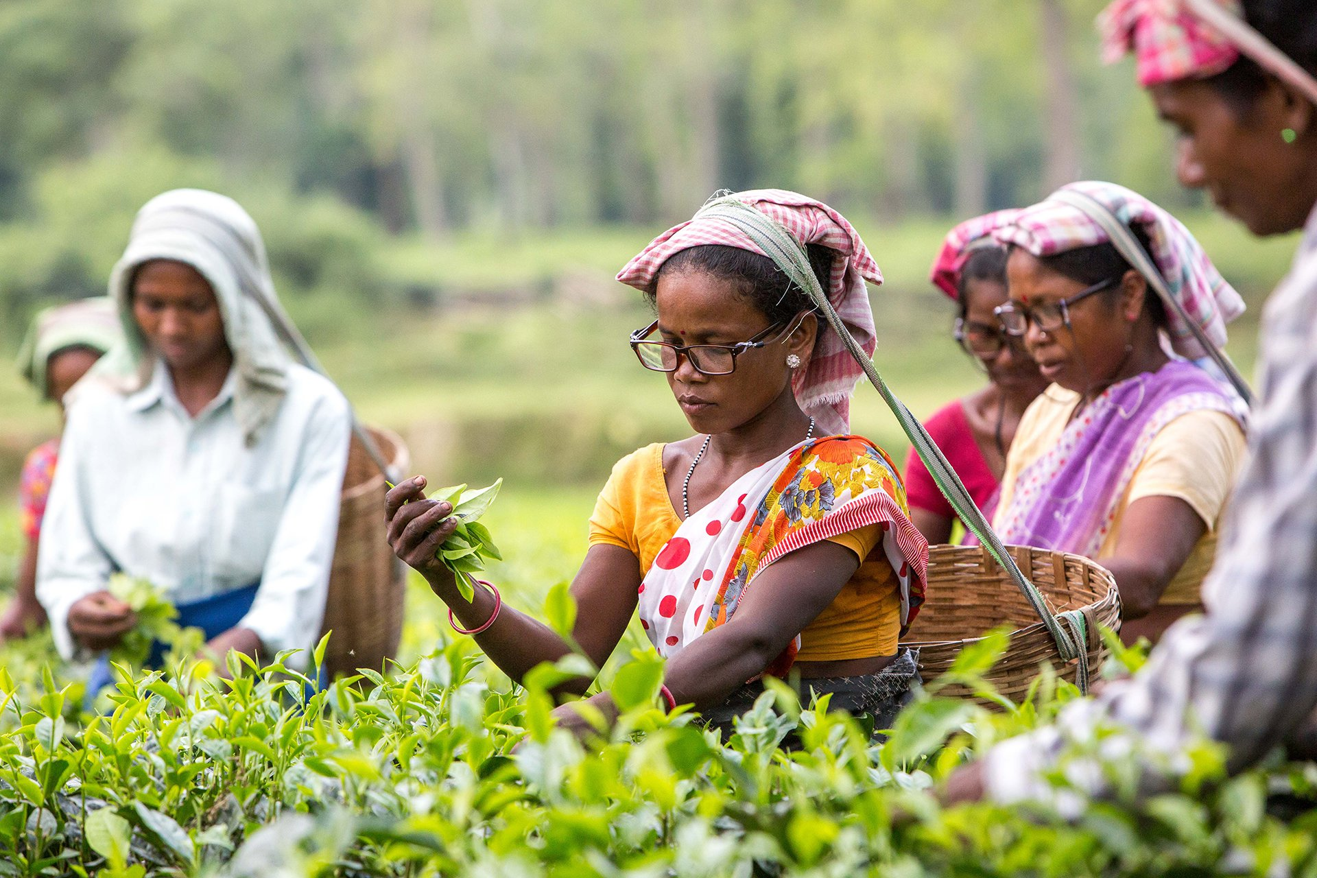 Clearly-tea-pickers-research-India