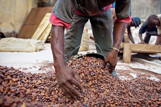 ghana cocoa famer flickr