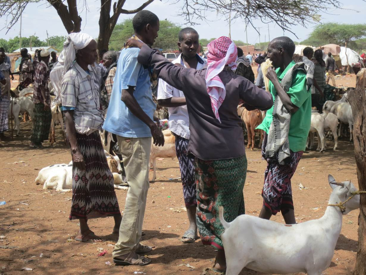 Pastoralist_men_trade_goats_and_other_animals_at_a_market_in_the_centre_of_Wajir_town%2C_June_8%2C_2017._Thomson_Reuters_Foundation-Zoe_Tabary.jpg