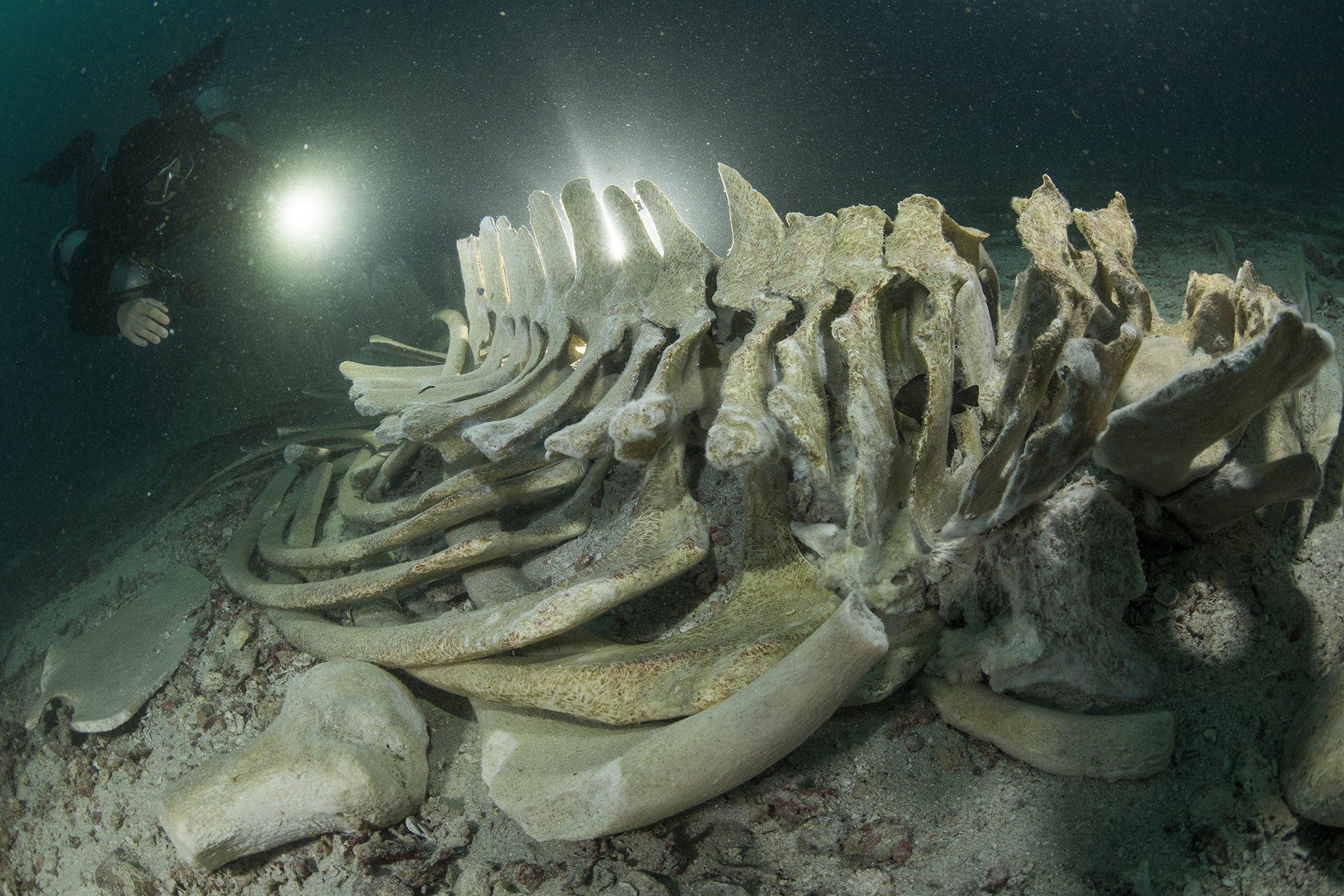 2021UNWOD Oceanic Discoveries Sirachai Arunrugstichai 3rd Place.jpg