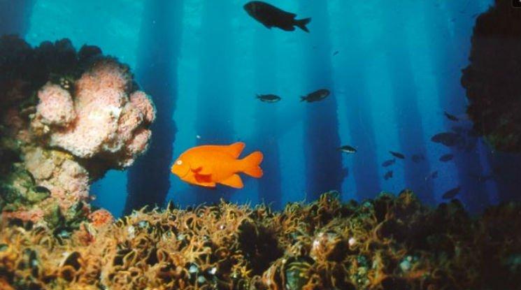 Coral reef oil rig.jpg