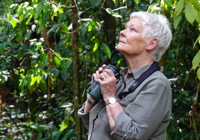 Judi Dench Adopts 3 Orangutans in Campaign to Save Rainforest From Palm Oil Destruction