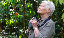 Article: Judi Dench Adopts 3 Orangutans in Campaign to Save Rainforest From Palm Oil Destruction