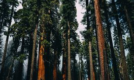 Article: Cloning Coastal Redwood Forests Could Help Fight Climate Change, Experts Say