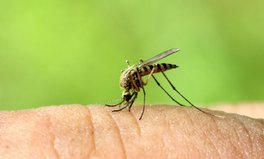 Article: DAWNS Digest: WHO Declares Zika Emergency
