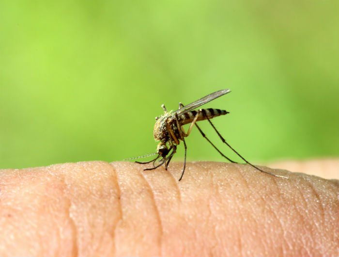 climate change_mosquito.jpg
