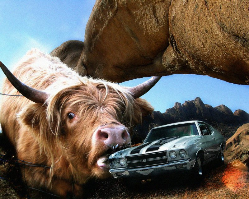 cow eats car.jpg