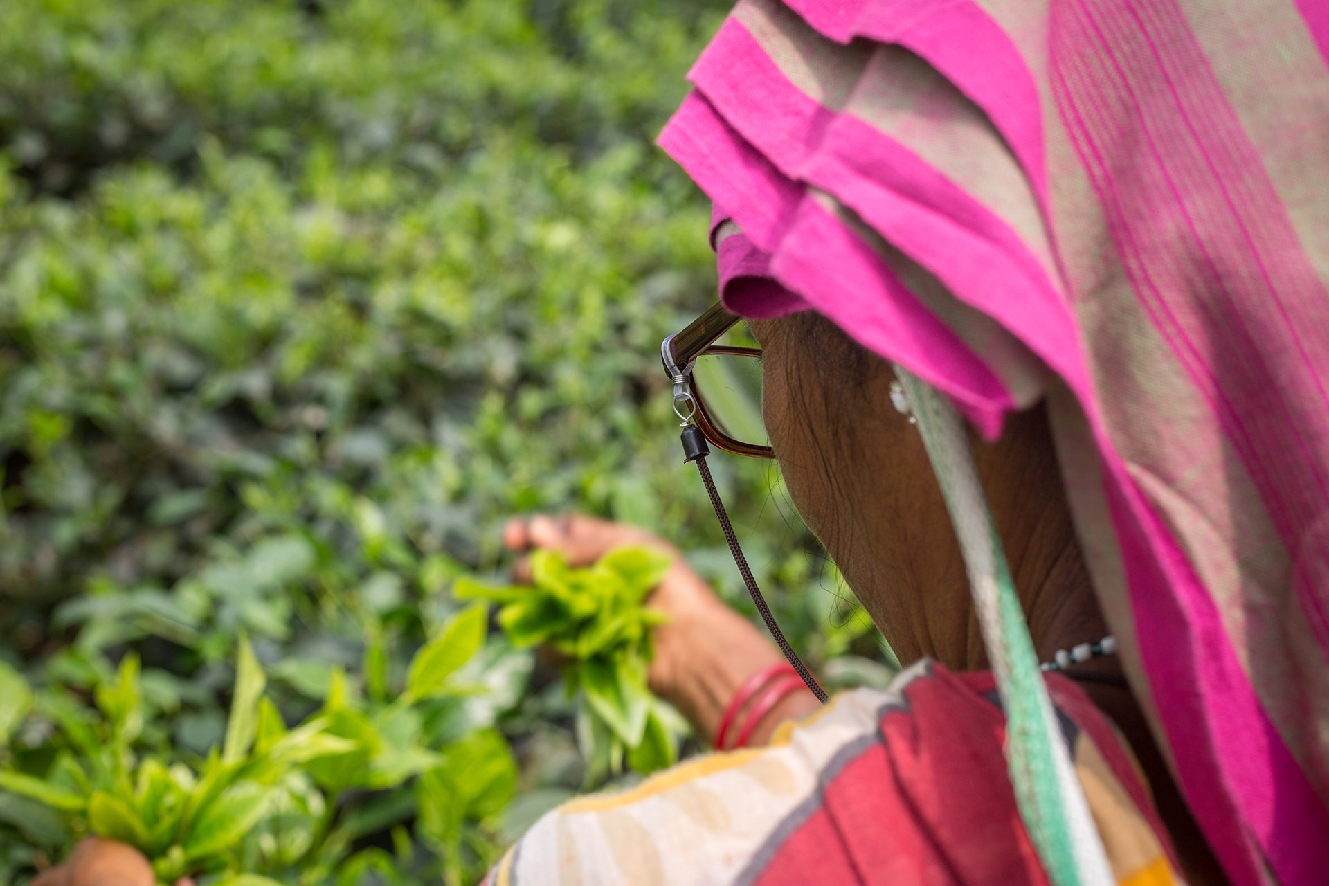 Clearly-tea-pickers-research-india-3
