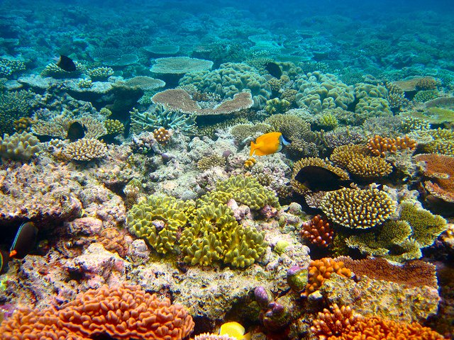 Disappearing places - Great Barrier Reef - body.jpg