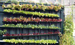 Article: Farms Grow Up: Why Vertical Farming May Be Our Future