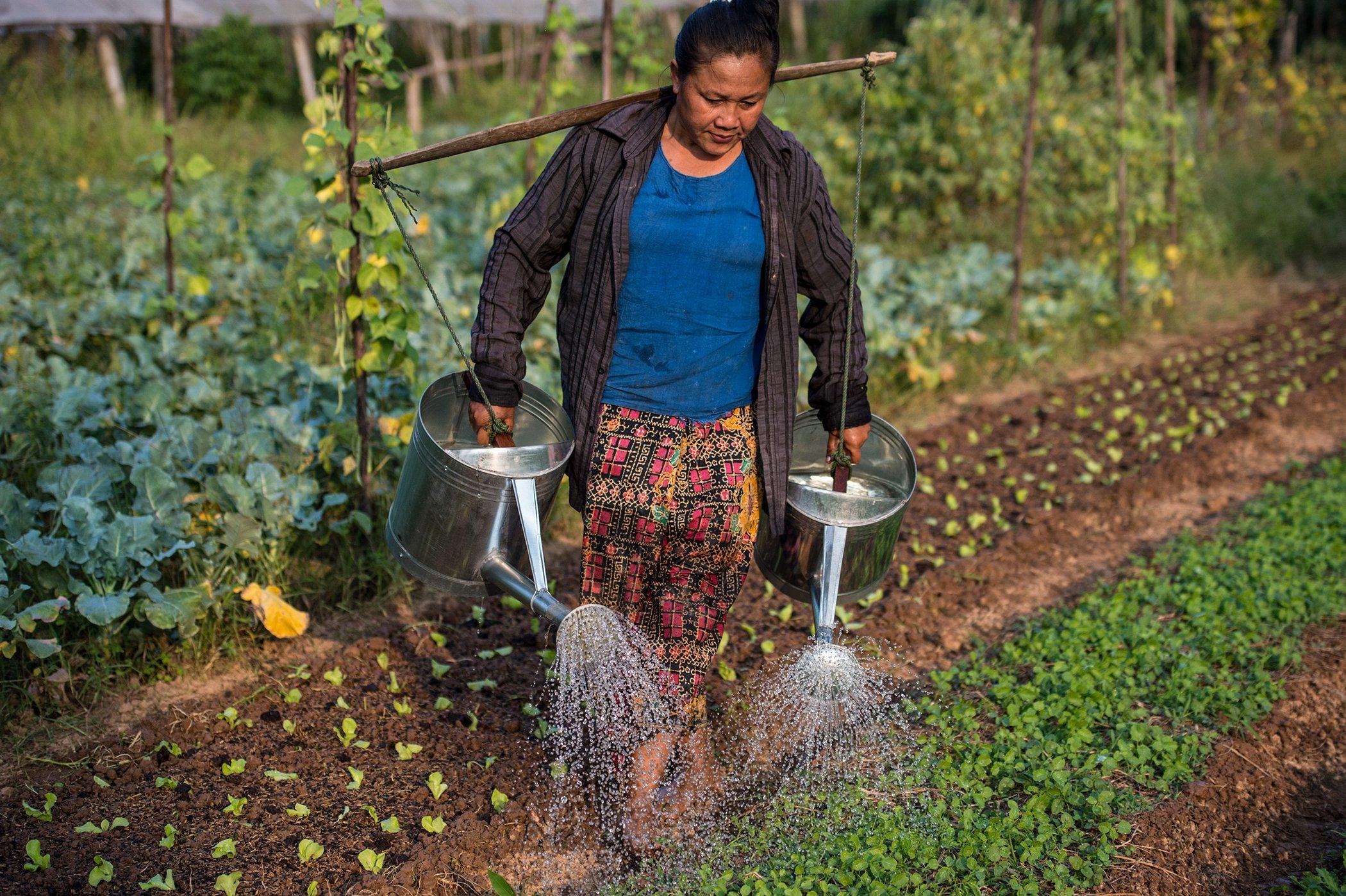 Biodiversity-Organic-Farming-Laos.jpg