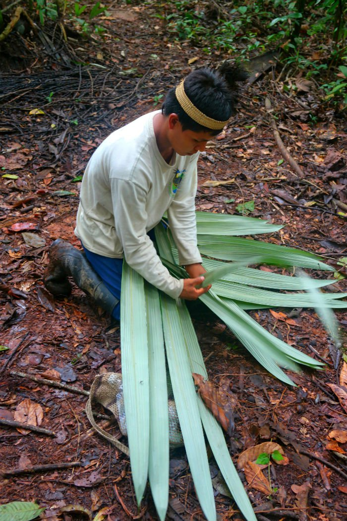 medicines from the rainforest 2.jpg