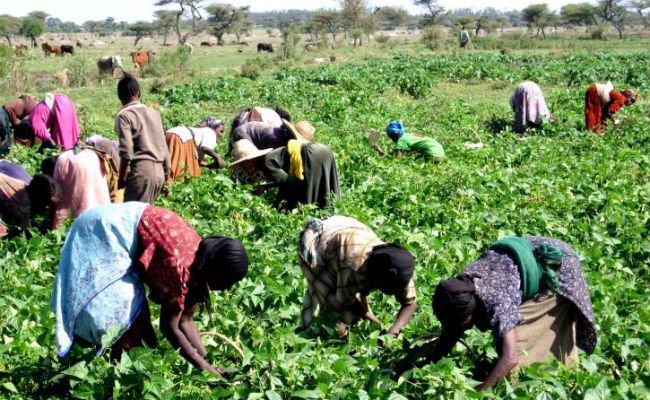small farmers africa.jpg