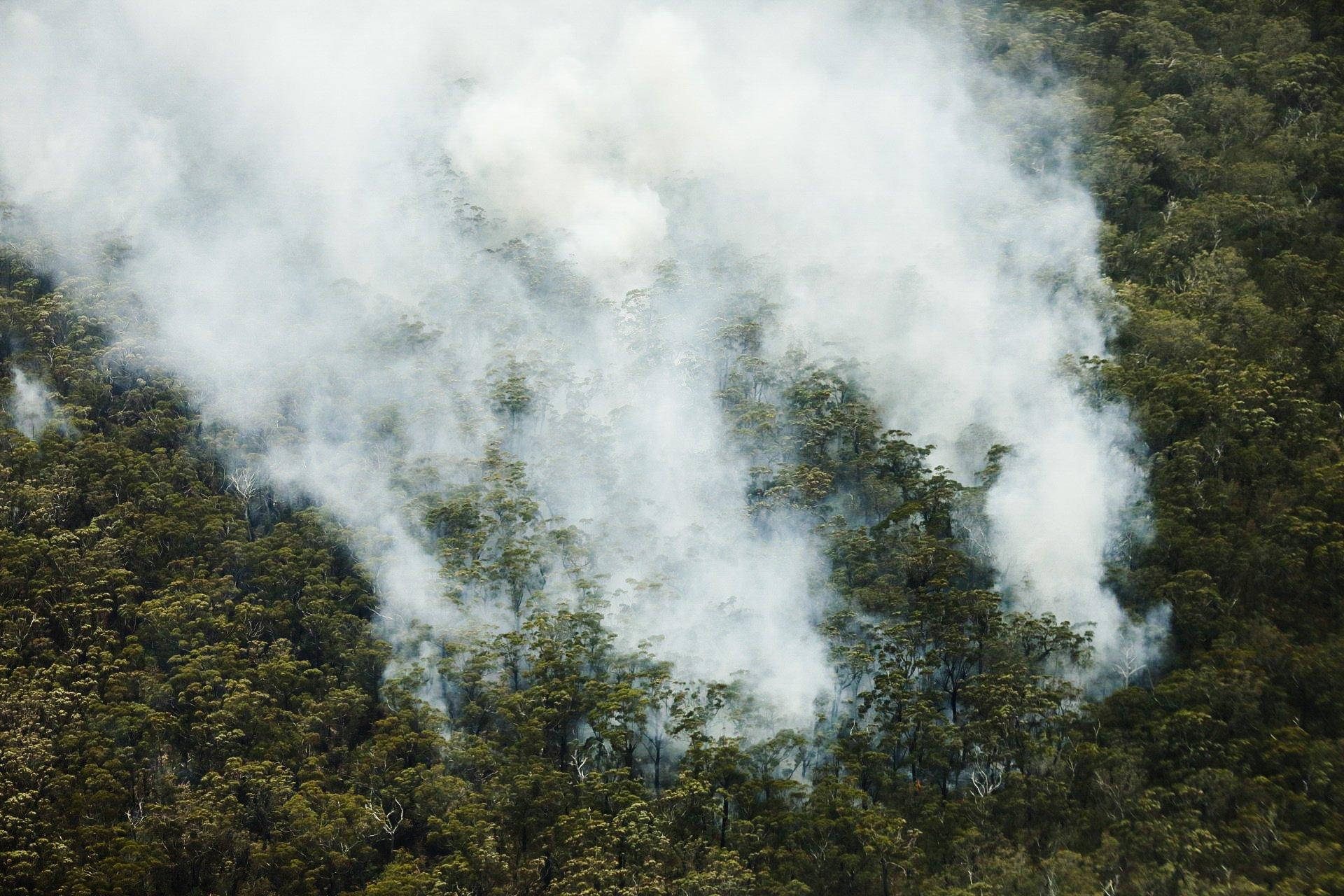 IFAW-Australien-Koalas-Aufforstung-Waldbrände_2.jpg