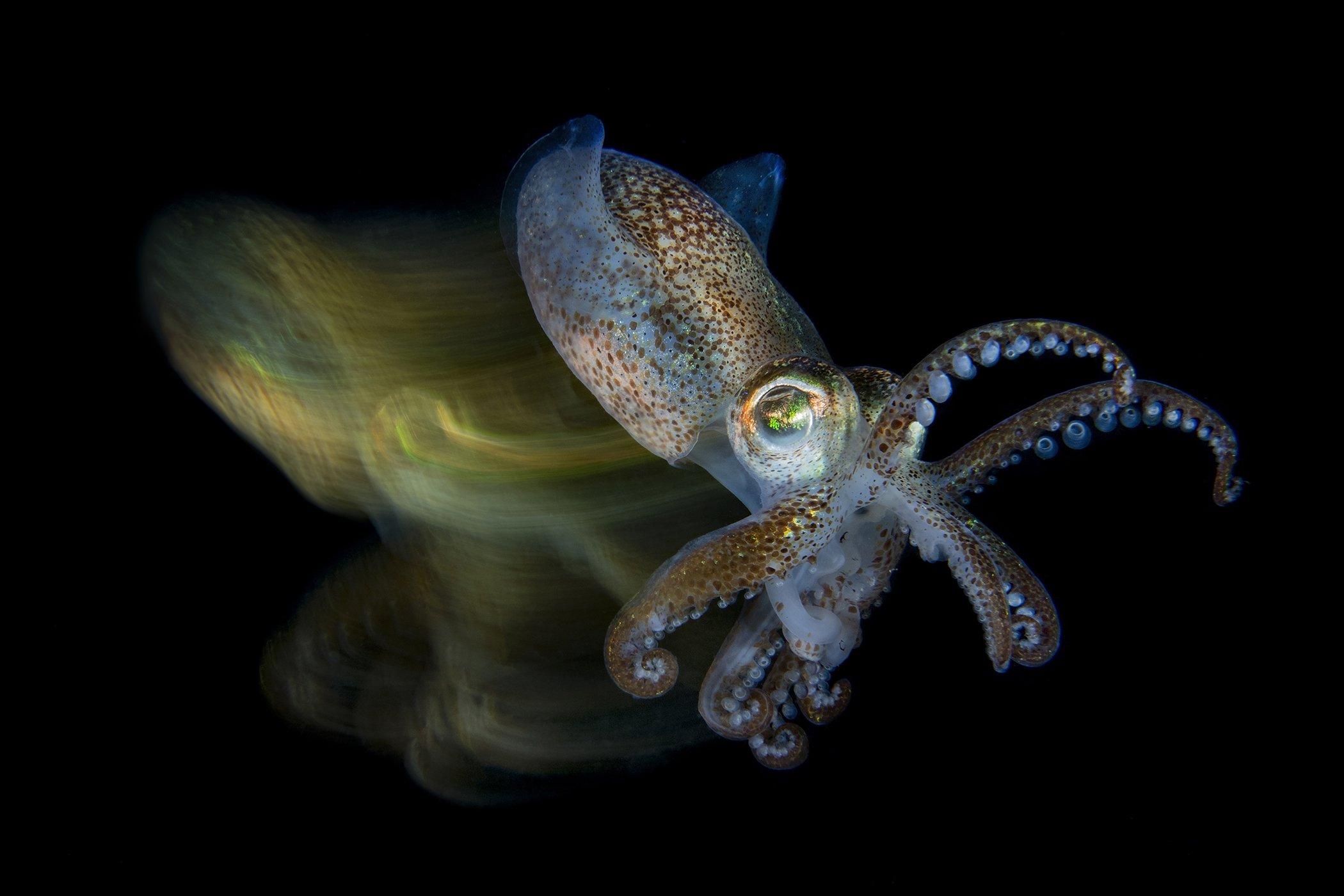UnderwaterPhotographerOfTheYear_201FabioFabioIardino_003.jpg