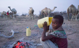 Article: Camel Milk Provides Nutrition During Devastating Kenya Drought