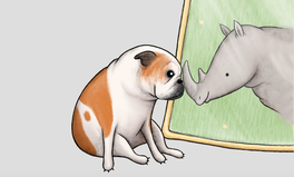 Article: This Children's Book Uses an Adorable Bulldog to Teach Inclusivity