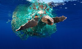 Article: World Oceans Day: These Photos Show the Importance of Marine Conservation
