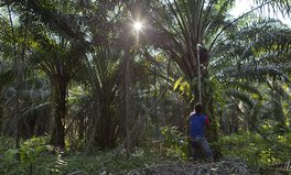 Artikel: How to Make Sure the Palm Oil in the Products You Buy Is Ethical and Sustainable