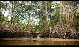 Video: Defending the Mangroves