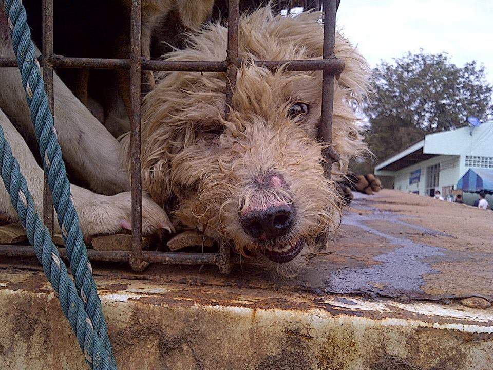 Dogs Crate 9 Face Shot.jpg