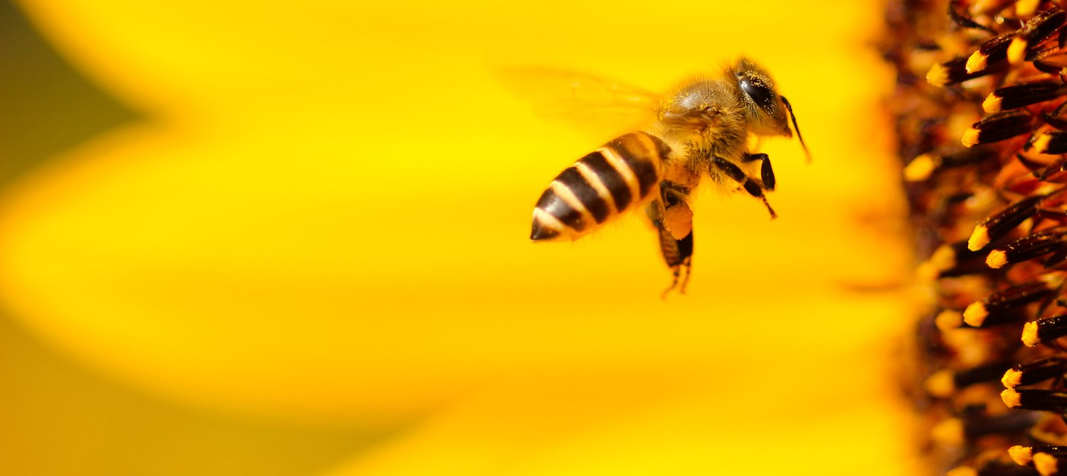 This Company Is Giving Bees a Super Food to Make Them Stronger