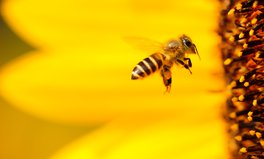 Artikel: This Company Is Giving Bees a Super Food to Make Them Stronger
