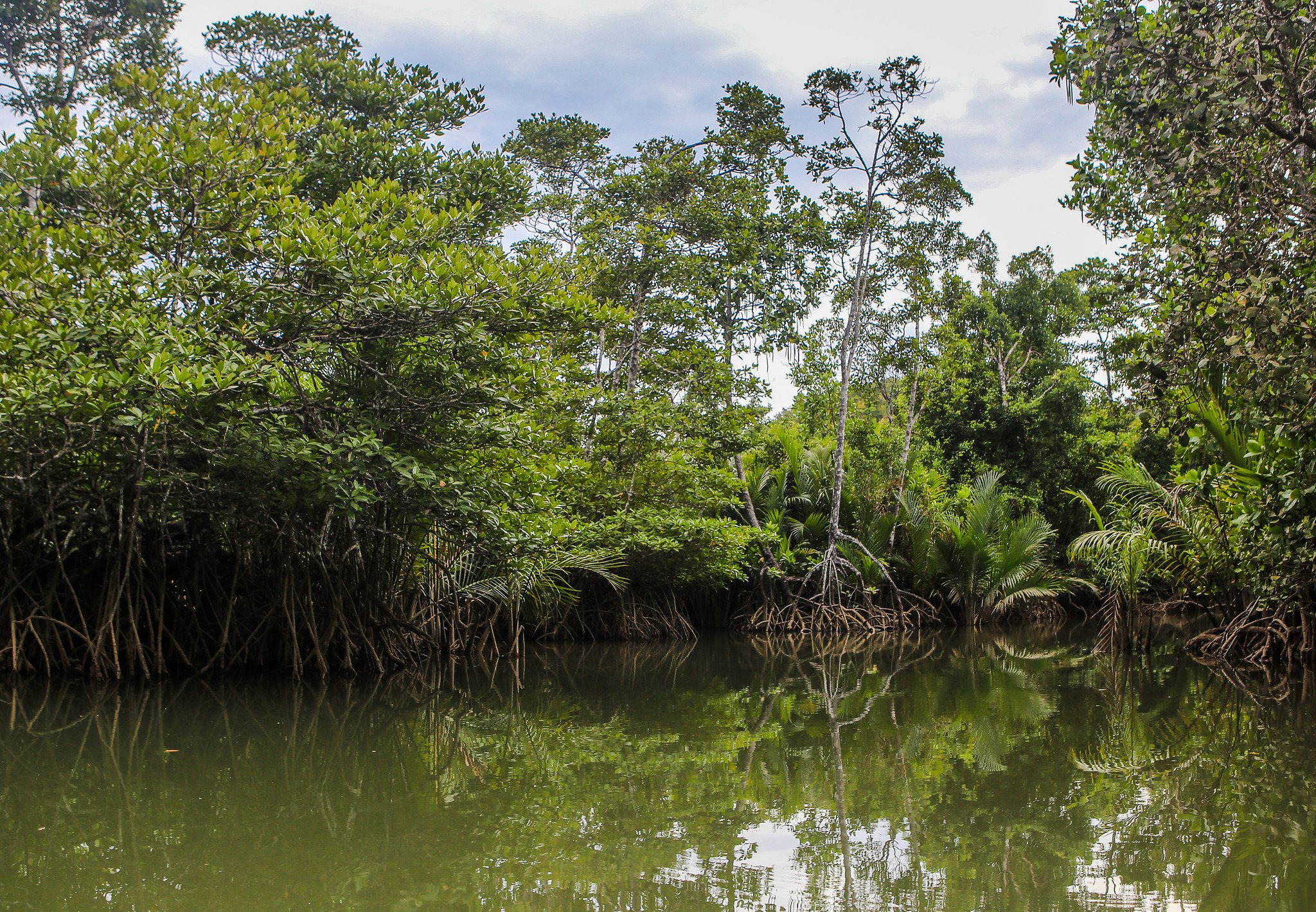 Mangrove forest in the Philippines