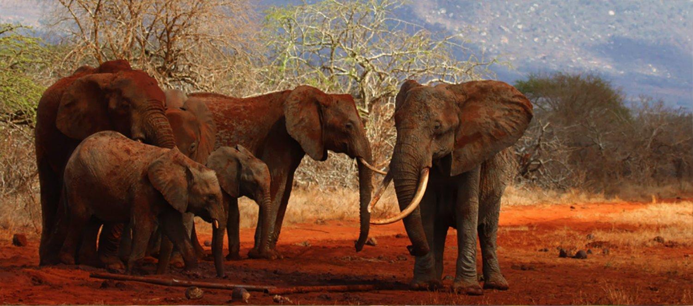 red elephant.jpg
