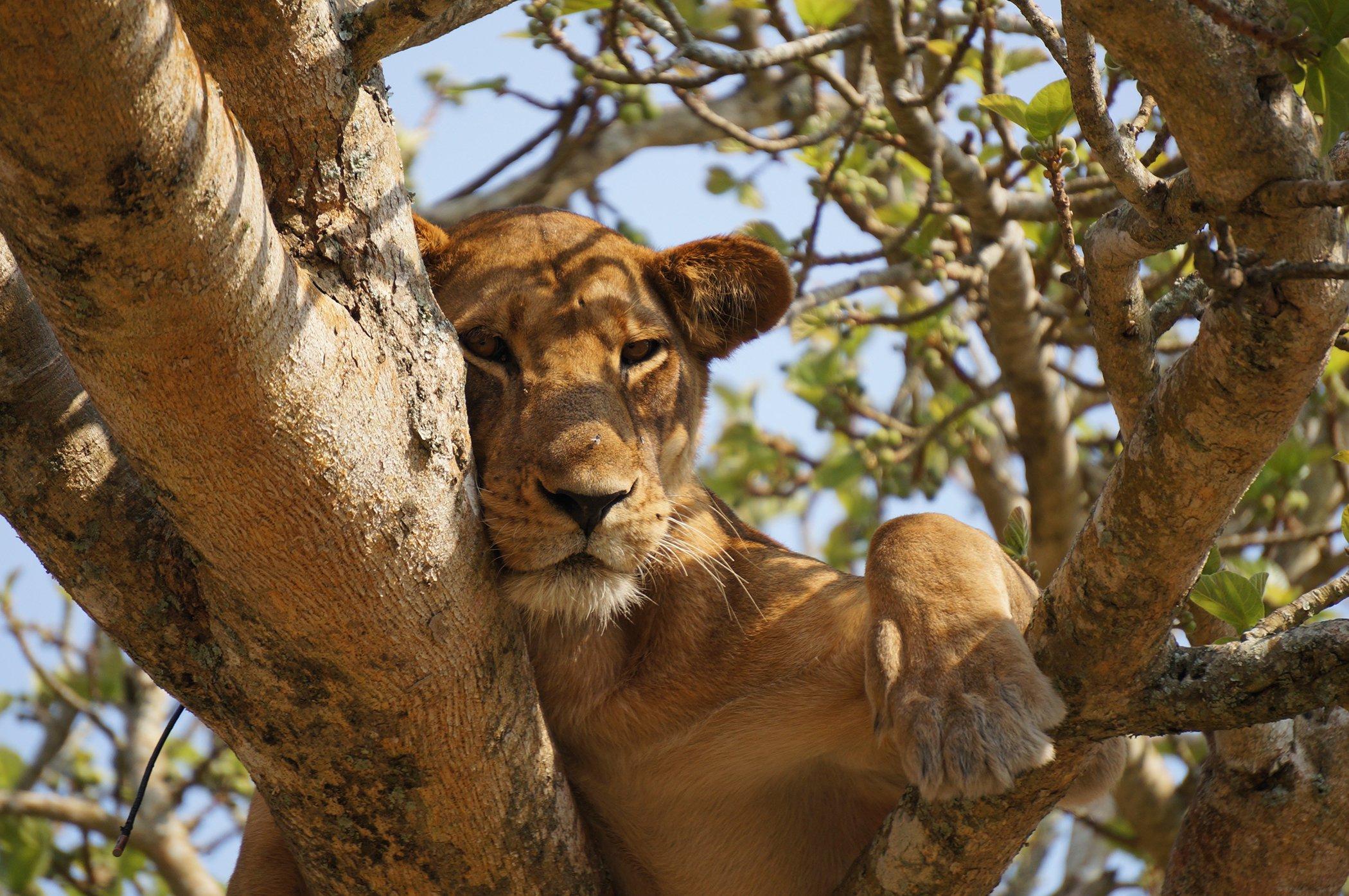 World-Wildlife-Day-Big-Cats-1.jpg