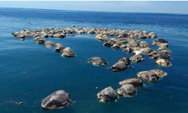 Artículo: 300 Endangered Turtles Found Dead, Trapped in Nets, Off Mexico's Coast